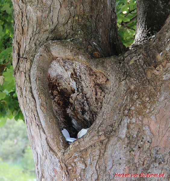 Baum-Herz