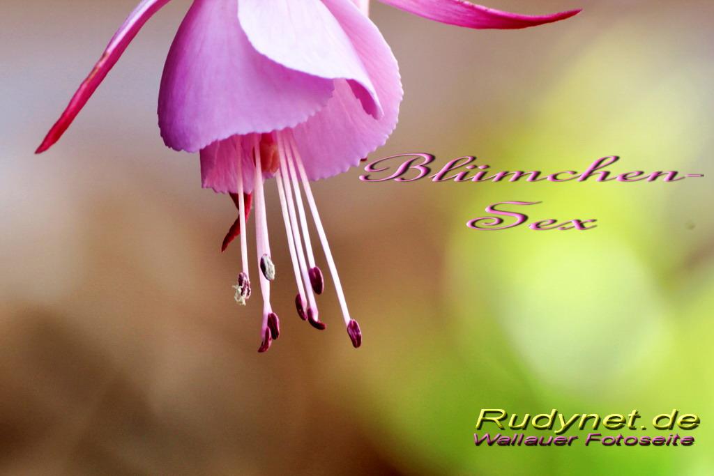 bluemchen-sex